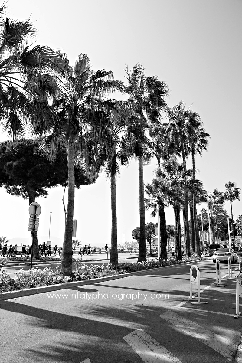 photo noir et blanc cannes palmiers
