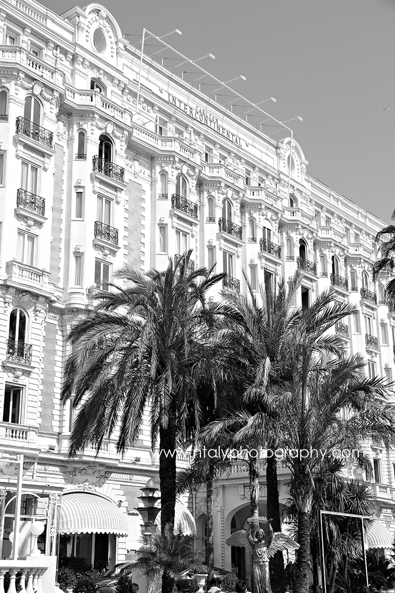 photo le carlton cannes palmiers