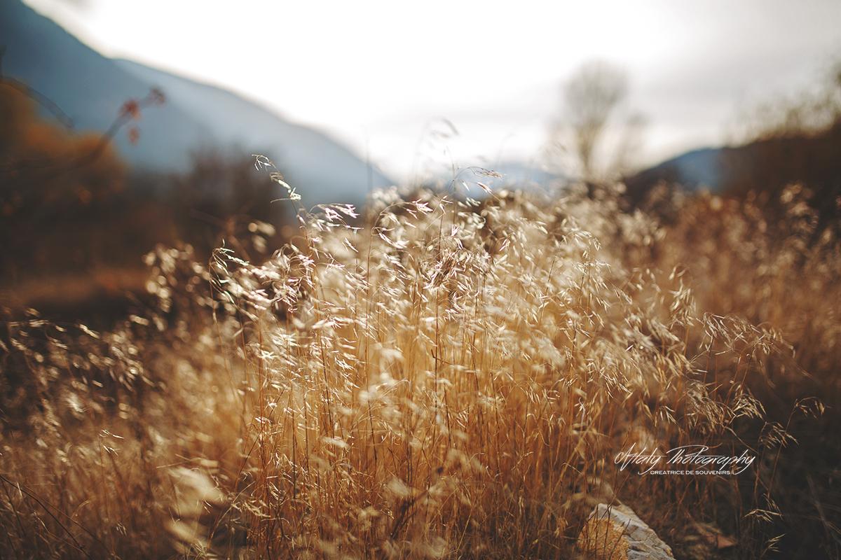 nature herbes blé