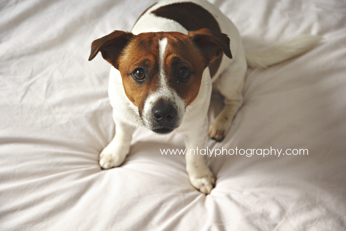chien photo lifestyle photographe cannes