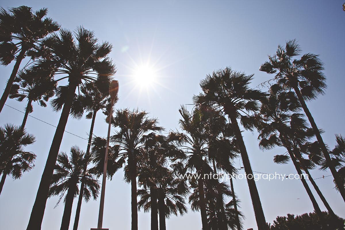 palmiers croisette soleil cannes