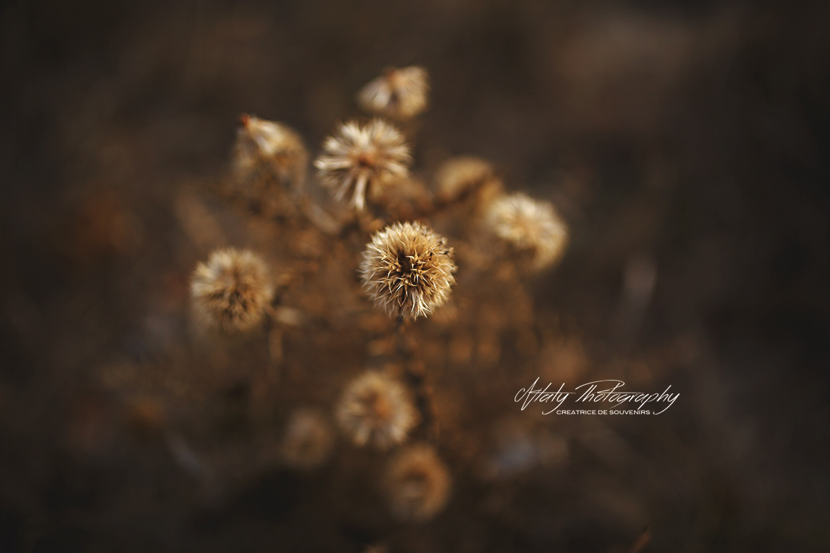 macro photographie nature