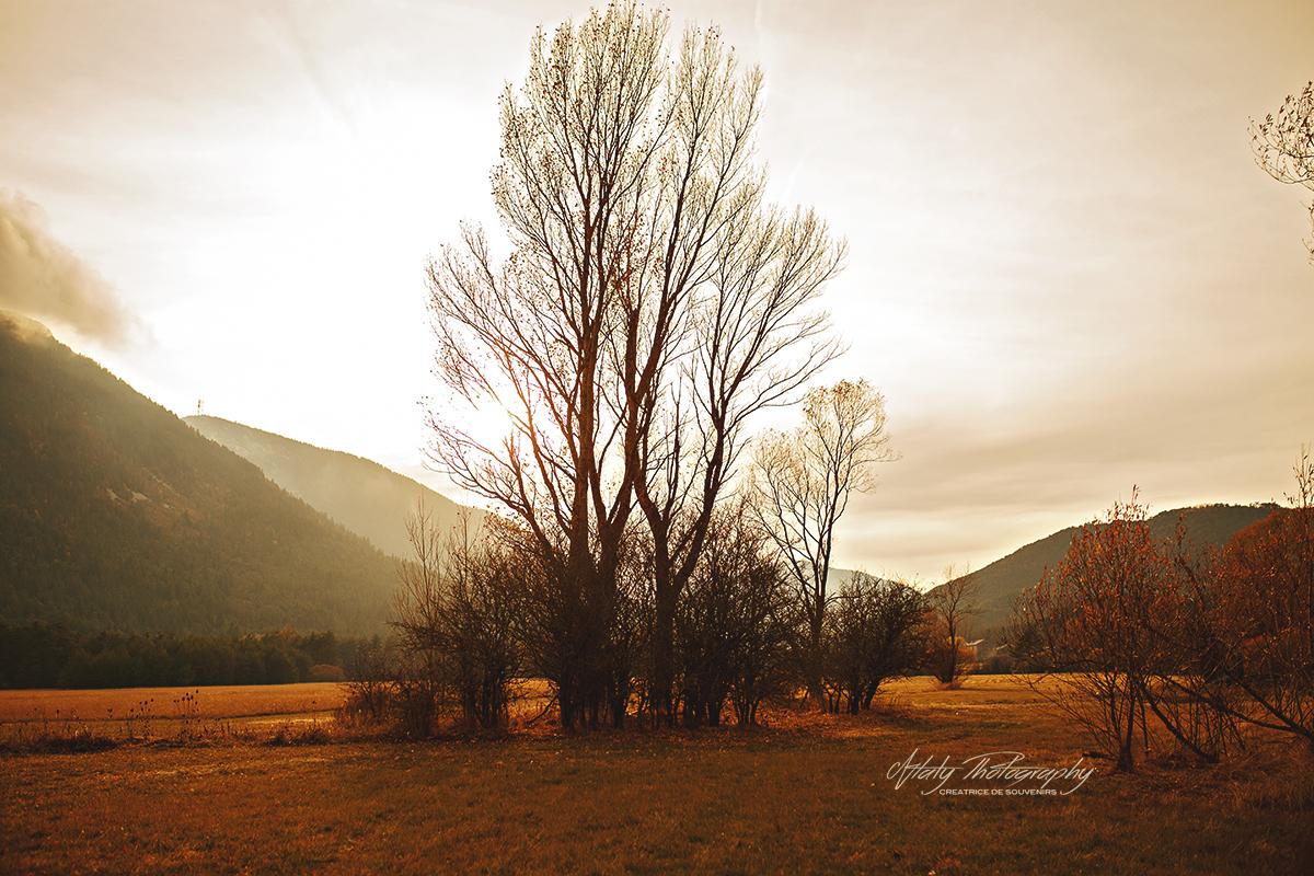 arbre paysage automne